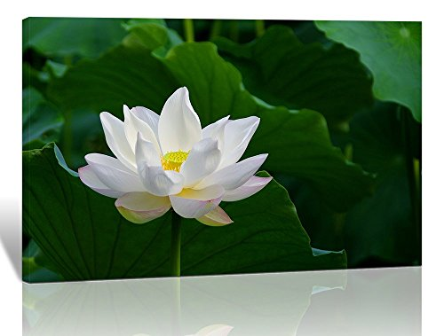 Purple Verbena Art Stretched and Framed White Summer Lotus with Green Leaf Calmness Concept Pictures Prints on Canvas Walls Paintings, HD Modern Giclee Wall Artwork for Home Bedroom Decor (12''x16'')