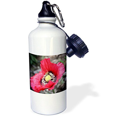 Poppy Nectar - 3dRose WhiteOaks Photography and Artwork - Poppy Flowers - Home is where the nectar is a photo of a bee inside a poppy flower - 21 oz Sports Water Bottle (wb_252494_1)