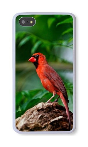 iPhone 5S Case, White PC Hard Phone Cover Case For iPhone 5S With Animal Red Bird Phone Case