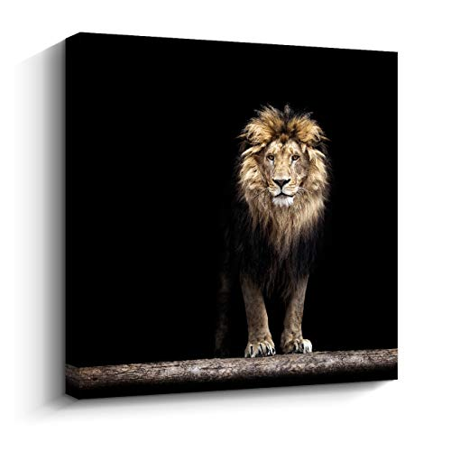 Premium Black Canvas Print King of The Jungle Lion Wall Art