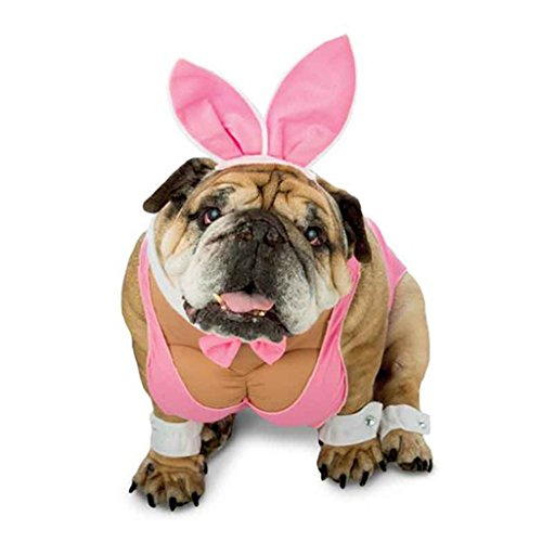Zelda Hunny Bunny Dog Costume