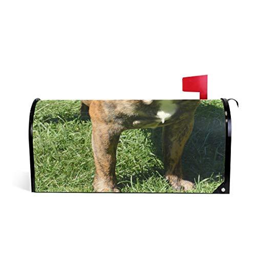 PVC Magnetic Mailbox Cover,Brindle French Bulldog Mail Box Makeover Waterproof Anti Sunburn Decor Standard Size