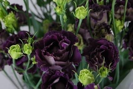 Amazon New 20 Black Pearl Lisianthus Flower Seeds Eustoma