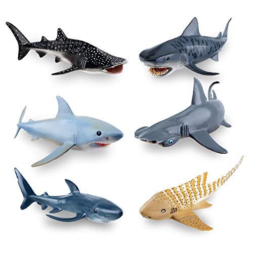 zebra shark - 3