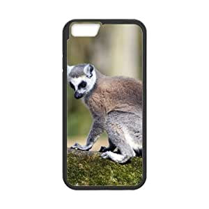 Hard Shell Case Of Squirrel Customized Bumper Plastic case For Iphone 4/4s