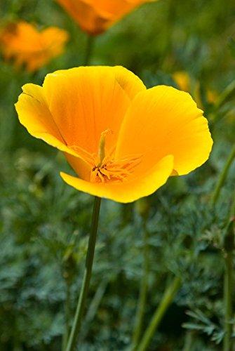 Sustainable Seed  Sustainable Seed
