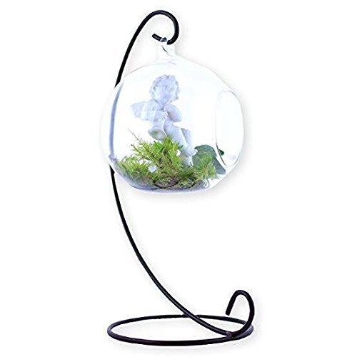 Barlin Gallery, LLC Glass Plant Vase Terrarium Globe with Metal Stand, Elegant and Decorative with Free Urban Gardening eBook