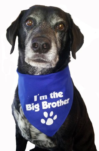 bandana-im-the-big-brother-for-medium-to-large-dogs-royal-blue