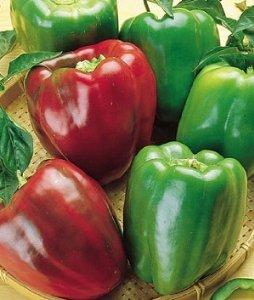 Sweet Green Peppers - Burpee Pepper California Wonder 60520 (Red to Green) 100 Organic Seeds