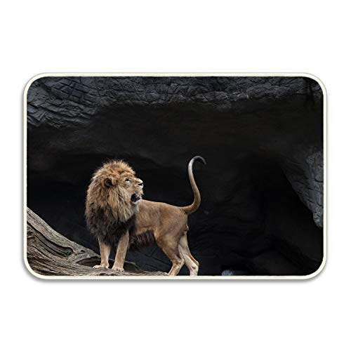 Elvira Jasper Valley of Lions Non-Slip Doormat Floor Door Mat Indoor Outdoor Bathroom 16x24 inch