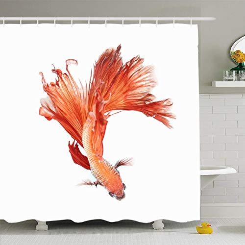 (Ahawoso Shower Curtain 60x72 Inches Aggressive Eye Betta Fish Siamese Fighting Nature View Aquarium Aquatic Design Color Waterproof Polyester Fabric Set with Hooks)