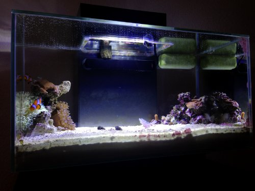 amazoncom 18 watt ultrabrite reef led system for fluval edge aquarium lights pet supplies