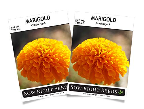 Sow Right Seeds Crackerjack Marigold Seeds - Full Instructions for Planting, Beautiful to Plant in Your Flower Garden; Non-GMO Heirloom Seeds; Wonderful Gardening Gift (2)