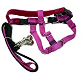 """2 Hounds Design PK 1SM RASP Freedom No-Pull Harness with Leash, (1"""" Wide), Raspberry, Small"""