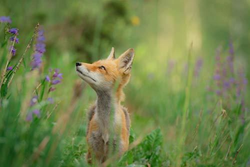 Green Flower Red Fox (Art Print)