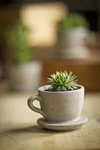 Vagabond Vintage, Concrete Tea & Coffee Cup Planter