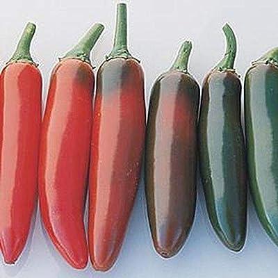 Serrano del Sol F1 Hybrid Hot Pepper Seeds (25 Seeds) : Garden & Outdoor