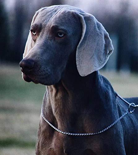 SGODA Silver Chain Dog Choke Collar