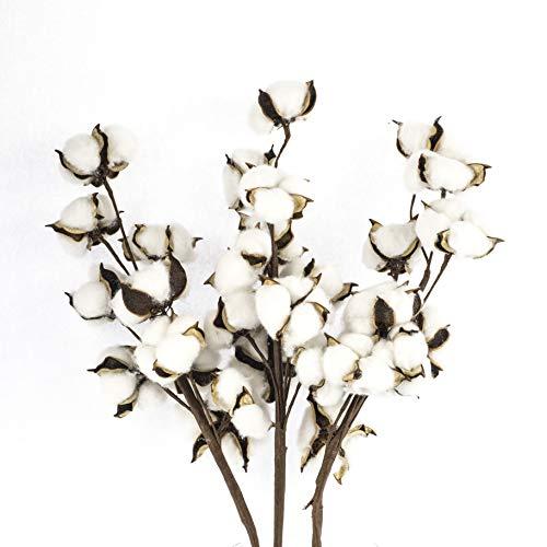 Antea Decor Cotton Stems 6 Pack - Rustic Cotton Branches - Farmhouse Decor - 10 Balls Per Stem - 21 Inches ()