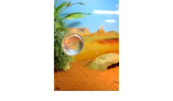Tope para cristal, transparente: Amazon.es: Productos para ...