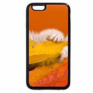 iPhone 6S Plus Case, iPhone 6 Plus Case (Black & White) - kitty on a fall leaves