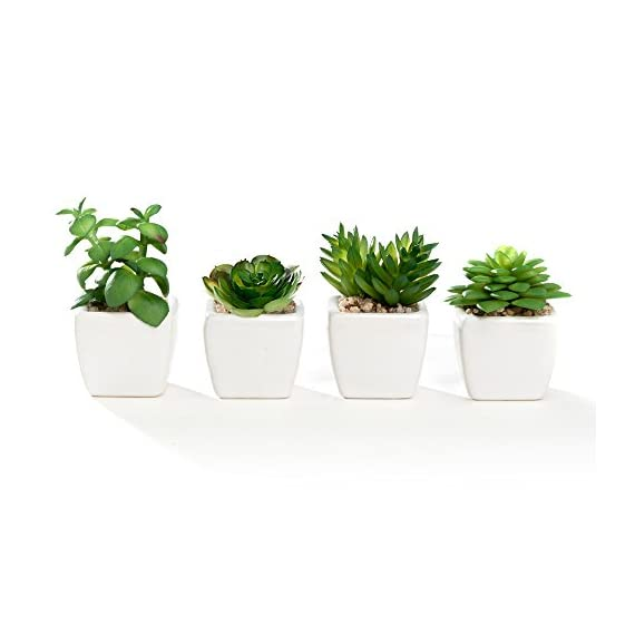 Nattol Modern Mini Artificial Succulent Plants Potted in Cube-Shape White Ceramic Pots for Home Decor, Set of 4 (White) - Perfect for both indoor decor Set of 4 lifelike faux artificial succulent plants are potted in white ceramic pots Leaves are made out of plastic and easy to care for - living-room-decor, living-room, home-decor - 41b CabmUeL. SS570  -