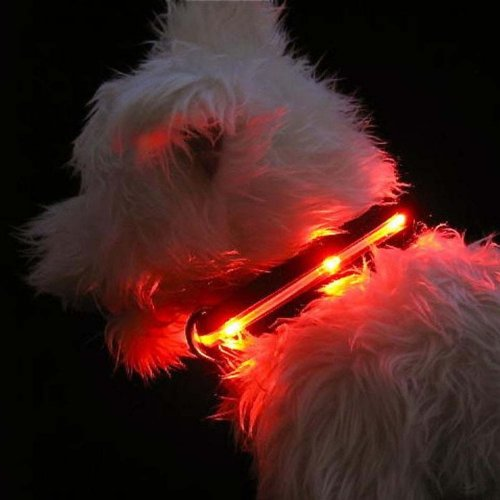 LED Lighted Dog Collars, My Pet Supplies