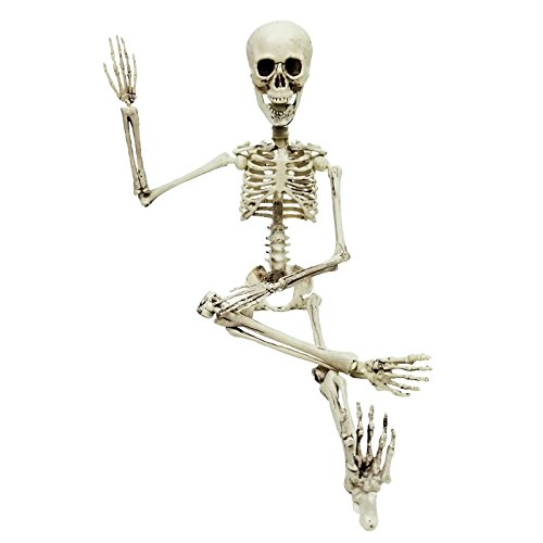 Professional Halloween Decorations (Poseable Skeleton Figure 19 Inch For Model Or Halloween Decoration - Multiple Custom Pose Positions)
