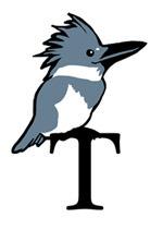 T Kingfisher