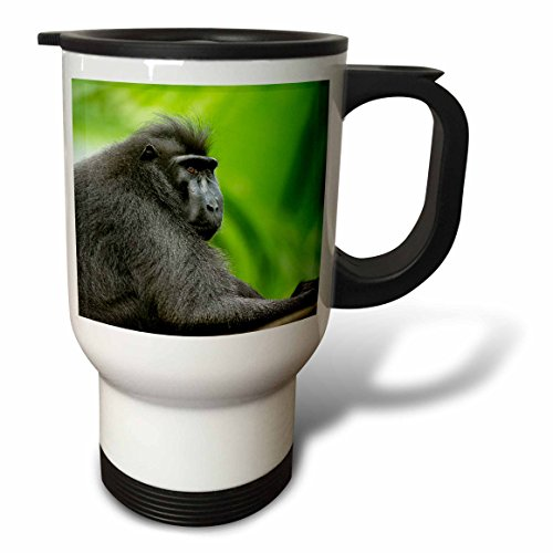 3dRose Danita Delimont - Primates - Asia, Indonesia, Sulawesi. Crested black macaque adult in rainforest. - 14oz Stainless Steel Travel Mug (tm_257191_1) by 3dRose