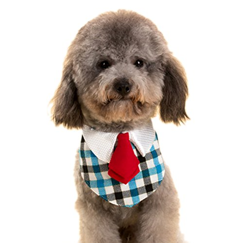 Alfie Pet by Petoga Couture - Morgan Bandana for Dogs and Cats - Color: Blue Plaid, Size: Medium for $<!--$8.99-->