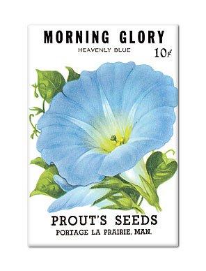 Morning Glory Seed Packet Artwork Fridge (Morning Glory Seed Packets)