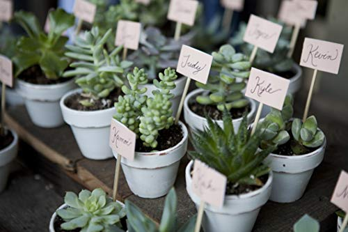 Costa Farms Unique Succulents Indoor Plants 11-Pack, Grower's Choice, 2-Inch Round, by Costa Farms (Image #3)