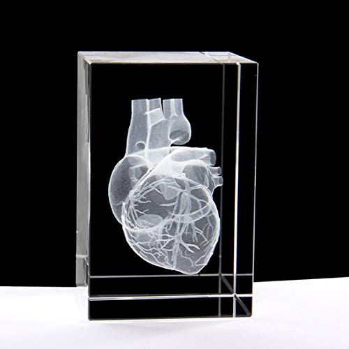3D Human Heart Anatomical Model Paperweight(Laser Etched) in Crystal Glass Cube Science Gift (No Included LED Base)(3.1x2x2 inch) (Best Anatomical Heart Model)