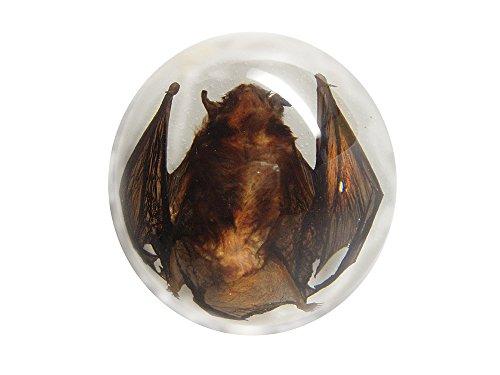 Lucite Dome (Lucite Treasures Small Bat Dome)