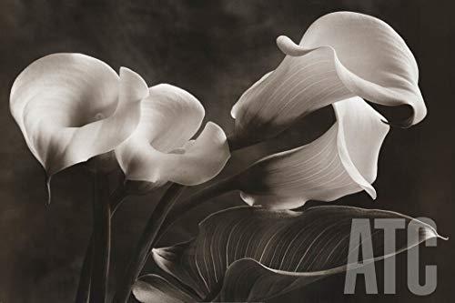 (ArtToCanvas 24W x 36H inches : Calla Lilies No. 1 by Sondra Wampler - Canvas )
