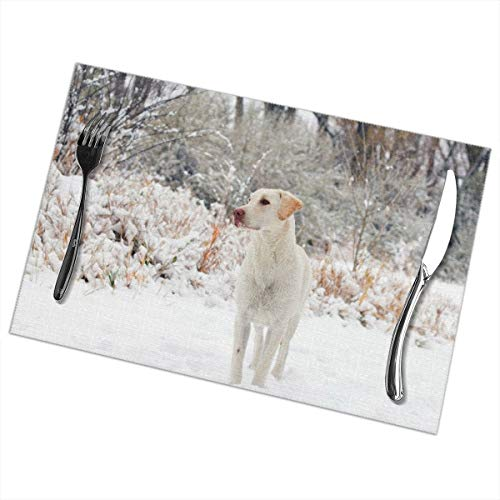 Affany Placemats for Dining Table, Heat Insulation Stain Resistant Table Mat Set of 6 Non Slip Washable Tray Mat Durable Place Mats for Kitchen Dining Room Table Decoration - Labrador Dog in Snow -