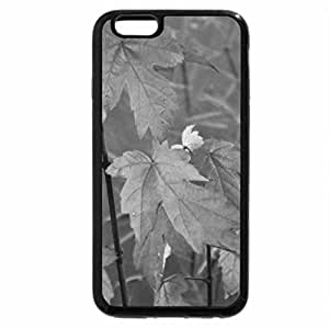iPhone 6S Case, iPhone 6 Case (Black & White) - baby maple tree