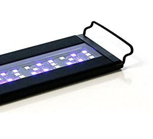 Multi-chip LED fixture