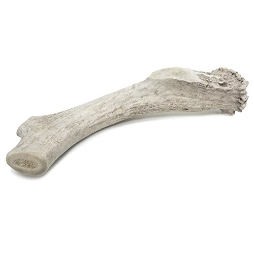 Products Ham Pet (Prairie Dog Pet Products Deer Antler Monster Treat, 8-9