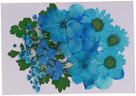 押し花 押し葉 天然 アート 手芸素材 蝋燭作り 花柄 樹脂ジュエリー作り用 添え物
