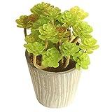 Gyouanime Fleshy Succulent Plants DIY Handmade Bonsai Fleshy Flower Art Home Decoration Plants (J, Multicolor)