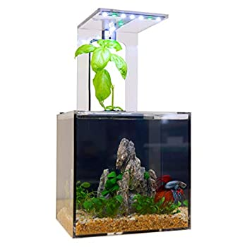 EcoQubeC Aquarium  Desktop Betta Fish Tank For Living Office And Home Dcor