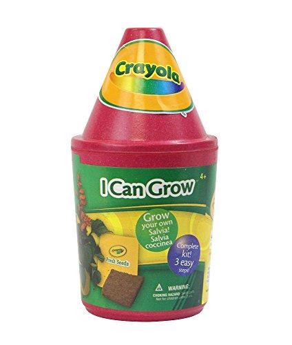 Grow Salvia Seeds - 8