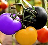 100 pcs Non GMO Heirloom Seeds Rainbow Tomato Plant Seeds Organic Vegetable Seeds For Planting
