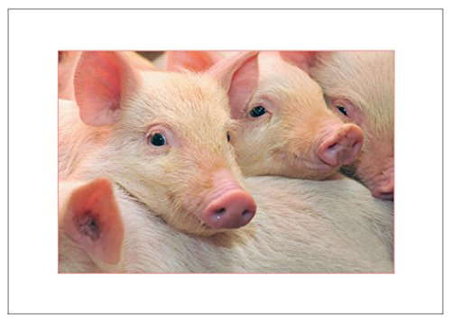 NW Pitney Ink Pigs in Pink Birthday Greeting Card, 7 x 5 Inches (1773) - Piggy Hugs