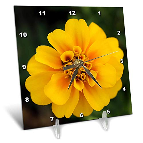 (3dRose Stamp City - Flowers - Macro Photograph of a Yellow Marigold Flower. - 6x6 Desk Clock (dc_312224_1))