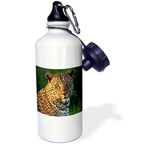3dRose wb_207363_1 Male Leopard Full-Grown Cub Portrait, Maasai Mara, Kenya Sports Water Bottle, Multicolor, 21 oz