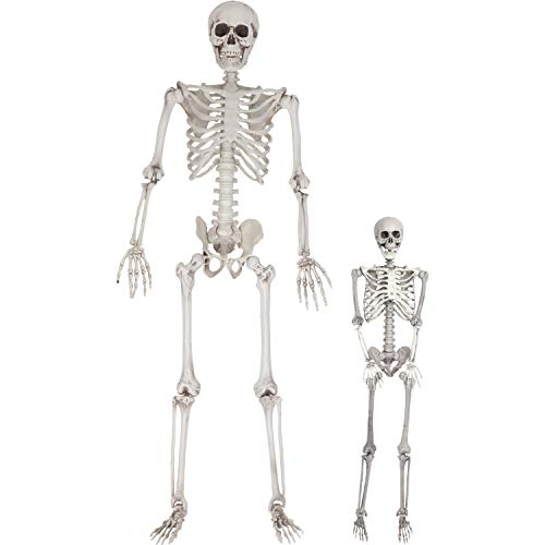 SCS Direct Halloween Life Size Skeleton Value Pack (Set of 2) - Adult (5' 4