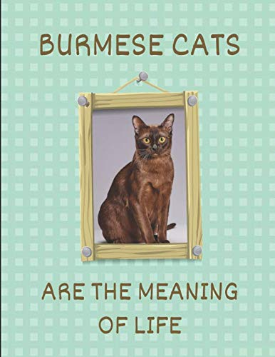 Burmese Cats Are The Meaning Of Life: 2019-2020 Weekly Calendar Planner
